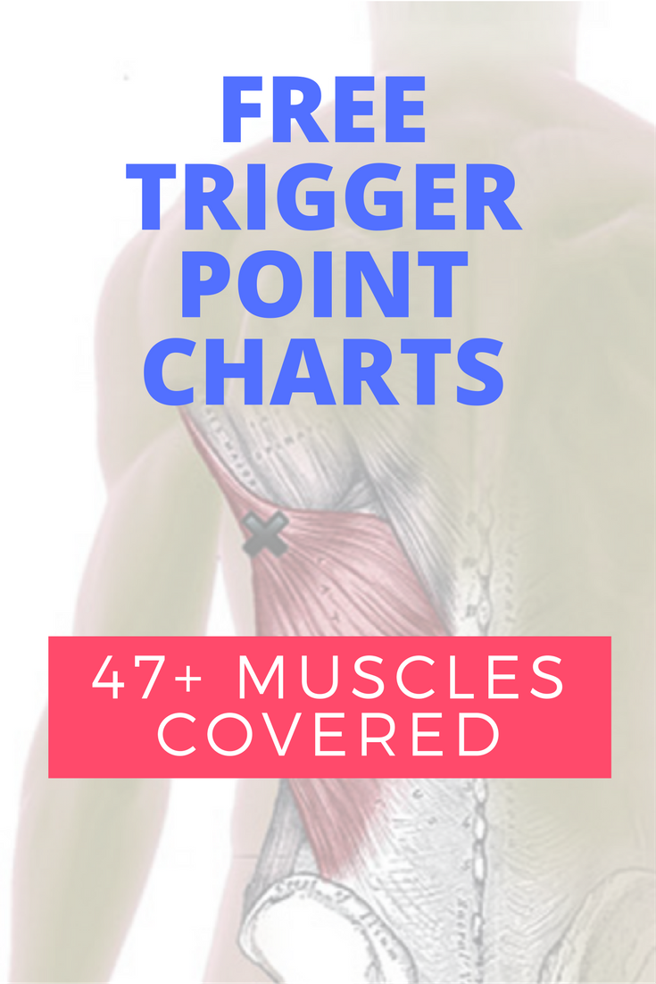 Trigger Point Guide